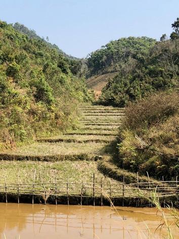 Terraced Farm and Water.jpg