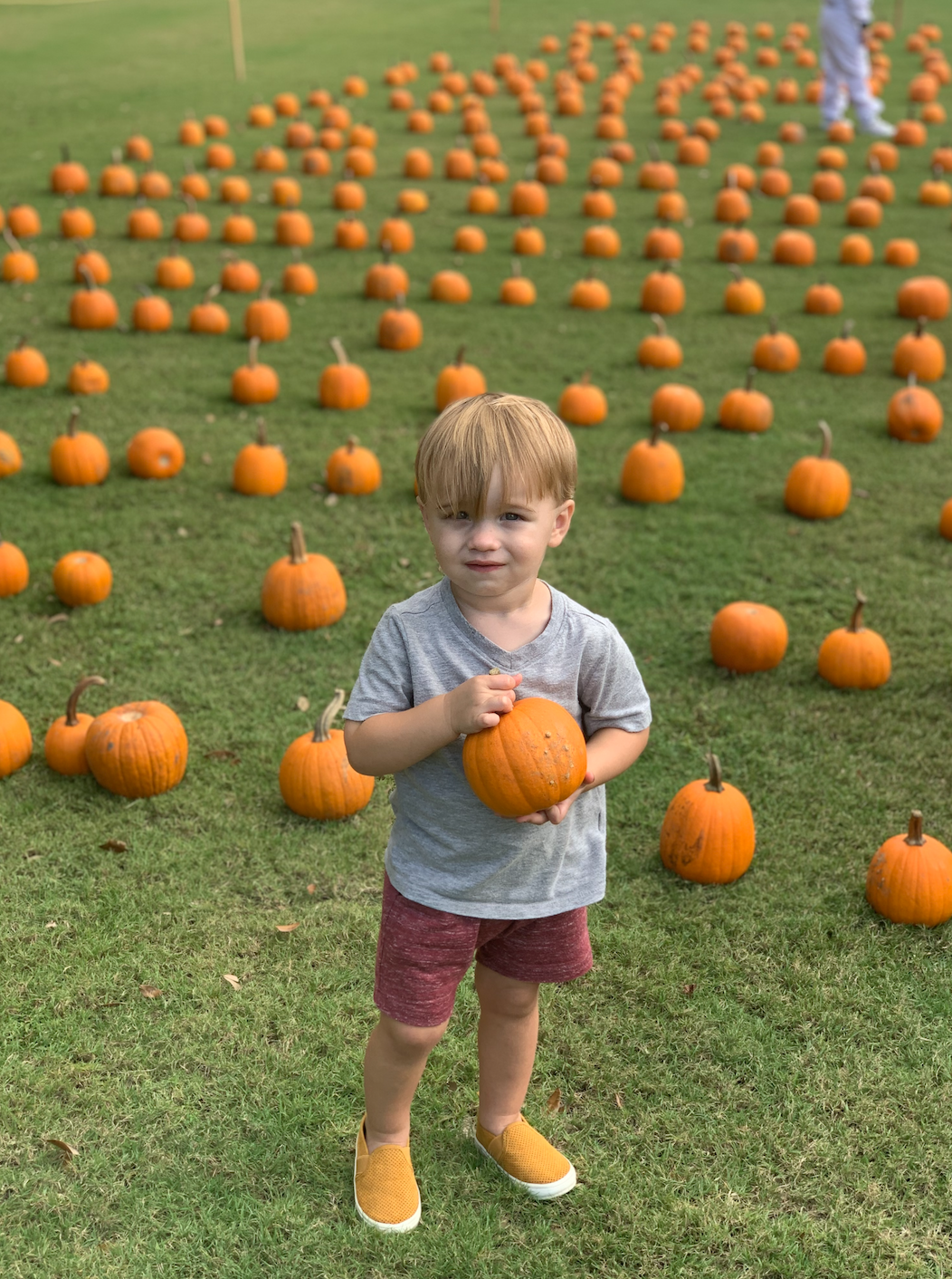 Little boy in the pumpkin patch