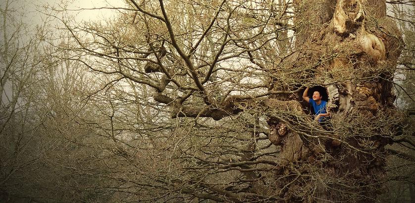 Kengo up a tree
