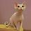 Thumbnail: 164 Yuta    female kitten Devon Rex