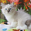 Thumbnail: 258 Skif   Siberian male kitten