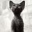 Thumbnail: 171 Tessa  female kitten Devon Rex