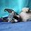 Thumbnail: 471 Duran  male Dwelf kitten