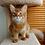 Thumbnail: 96 Bruks  purebred Somali male kitten