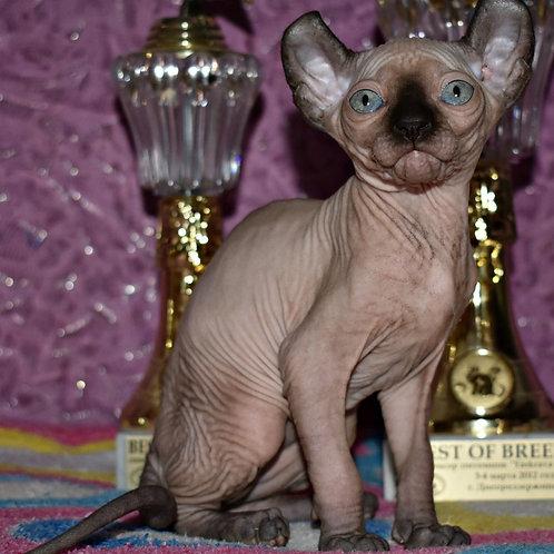 Legolas male Elf kitten