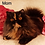 Thumbnail: 80 Eva   Persian  female kitten