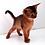 Thumbnail: 185 Mongol  purebred Abyssinian male kitten