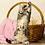 Thumbnail: 905 Gabby  British shorthair female kitten