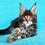 Thumbnail: 517 Nicole  Maine Coon female kitten