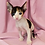 Thumbnail: 70 Nancy female kitten Cornish Rex
