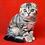 Thumbnail: 575 Rolda   Scottish fold shorthair female kitten