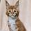 Thumbnail: 344 X-box   Maine Coon male kitten