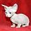 Thumbnail: 193 Antalia female Bambino  kitten