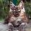 Thumbnail: 642 Habibe  Maine Coon female kitten