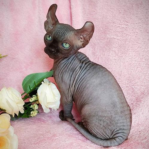 291 Lastik    male Elf  kitten