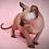 Thumbnail: 547 Lemberg  male Elf   kitten