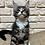 Thumbnail: 167 Juna Maine Coon female kitten