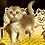 Thumbnail: 801 Mars  Scottish fold shorthair male kitten