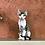 Thumbnail: 363 Katsby    male kitten Devon Rex