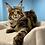 Thumbnail: 800 Jezzy   Maine Coon female kitten