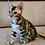 Thumbnail: 256 Dastin  purebred Bengal male kitten