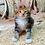 Thumbnail: 629 Naomi  Maine Coon female kitten