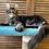 Thumbnail: 377 Elephant     Maine Coon male kitten