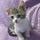 Thumbnail: 744 Karamelka     Munchkin shorthair female kitten