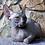Thumbnail: 541 Moon  female Sphynx   kitten