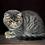 Thumbnail: 259 Matroskin  Exotic  male kitten