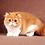Thumbnail: 248 Marisha   Persian  female kitten