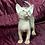 Thumbnail: 66 Ariya   purebred Abyssinian female kitten