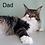 Thumbnail: 620 Michael  Maine Coon male kitten