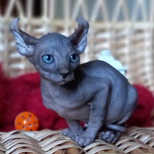735 Martin  male Elf   kitten