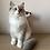 Thumbnail: 311 Mars      Siberian male kitten