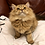 Thumbnail: 318 Mia   Scottish straight longhair female kitten
