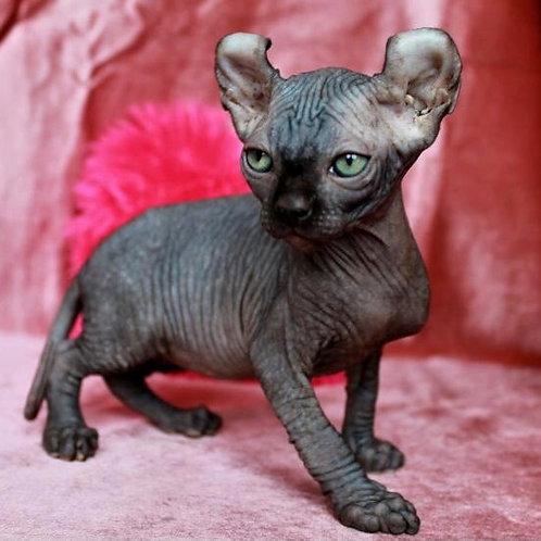 445 Jaguar  male Elf   kitten