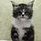 Thumbnail: 700 Arisha  Maine Coon female kitten
