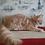 Thumbnail: 320 Nargiz    Maine Coon female kitten