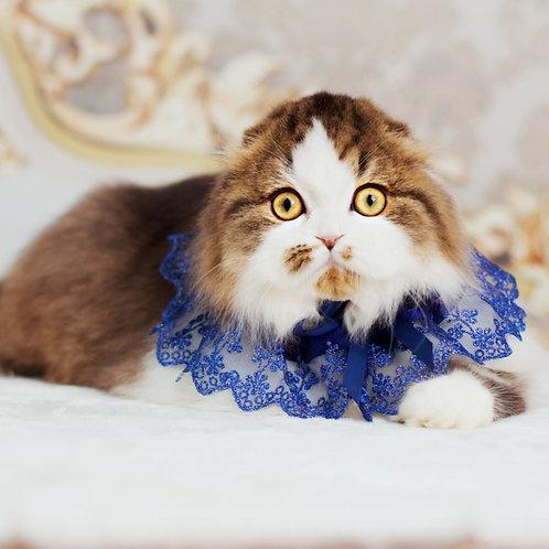 331 Xander    Scottish fold longhair male kitten