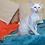Thumbnail: 248 Irakliy   Oriental male kitten