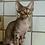 Thumbnail: 585 Illary  male kitten Devon Rex