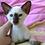 Thumbnail: 343 K*Lamarge Siamo Oriental male kitten