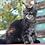 Thumbnail: 880 Irbis  Maine Coon male kitten