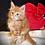 Thumbnail: 266 German  Maine Coon male kitten
