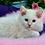 Thumbnail: 204 Oggy  purebred Ragdoll male kitten