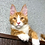 Thumbnail: 576 Ragnar  Maine Coon male kitten