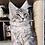 Thumbnail: 128 Richard  Maine Coon male kitten