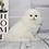 Thumbnail: 497 Talisman   Scottish fold longhair male kitten