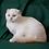 Thumbnail: 901 Glamurchik  Scottish fold shorthair male kitten